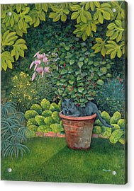 The Flower Pot Cat Acrylic Print by Ditz