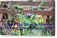 The Flower That Blooms In Adversity  Acrylic Print