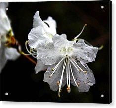 The Flower Acrylic Print by Tim Buisman