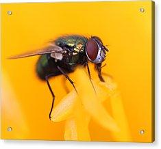 The Fly Acrylic Print