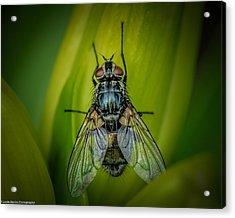 The Fly Acrylic Print by Linda Karlin