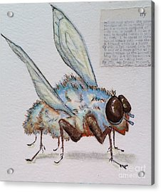 Acrylic Print featuring the drawing The Fly by Vickie Scarlett-Fisher