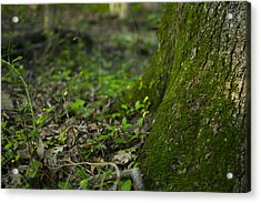 The Foot Of A Tree Acrylic Print by Michael Williams