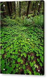The Forest Floor Acrylic Print by Rick Berk