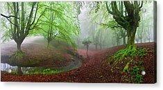 The Forest Maravillador IIi Acrylic Print