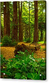 The Forest Of Golden Gate Park Acrylic Print