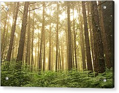 The Forest Of Souls Acrylic Print