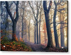 The Forest Path. Acrylic Print