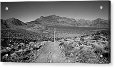 The Forever Road Acrylic Print by Peter Tellone