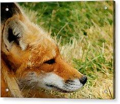 The Fox 7 Acrylic Print by Ernie Echols