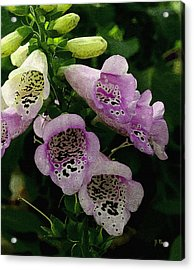 Acrylic Print featuring the photograph The Foxglove by James C Thomas
