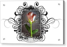 The Framed Rose Acrylic Print by Mauro Celotti