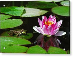 The Frog And The Lily Acrylic Print by Janice Adomeit