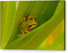 Acrylic Print featuring the photograph The Frog by Dennis Bucklin