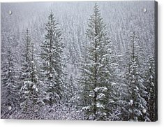 The Frozen Forest Acrylic Print by Darren  White