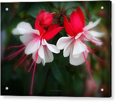 The Fuchsia Acrylic Print