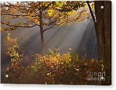 The Garden Of Eden Acrylic Print by Charles Kozierok