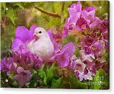 The Garden Of White Dove Acrylic Print by Olga Hamilton