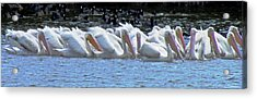 The Gathering 2 Acrylic Print by Will Boutin Photos