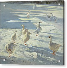 The Gathering  Acrylic Print by Timothy Easton
