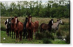 The Gathering Acrylic Print by Peter Skelton