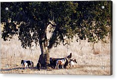 The Gathering Tree Acrylic Print