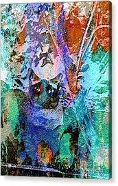 The Gato Acrylic Print