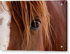Acrylic Print featuring the photograph The Gentle Eye  by Eric Rundle