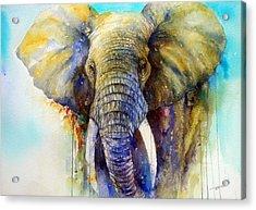 The Gentle Giant Acrylic Print