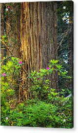 The Giant And The Flower Acrylic Print