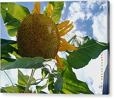Acrylic Print featuring the photograph The Gigantic Sunflower by Verana Stark