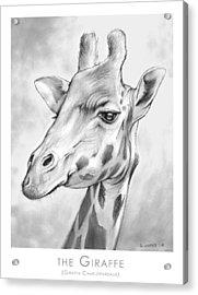 The Giraffe Acrylic Print by Greg Joens