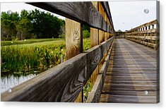 The Glades Acrylic Print by Kirk  Montgomery