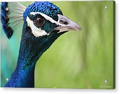 The Glamour Shot Acrylic Print by Amy Gallagher
