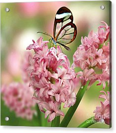 Acrylic Print featuring the mixed media The Glasswing by Morag Bates