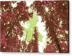 The Glimpse Sublime Acrylic Print