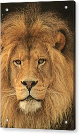 The Glory Of A King Acrylic Print by Laddie Halupa