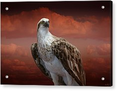 Acrylic Print featuring the photograph The Glory Of An Eagle by Holly Kempe