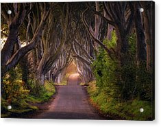 The Glowing Hedges Acrylic Print