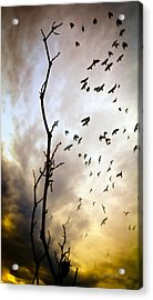 The Gods Laugh When The Winter Crows Fly Acrylic Print