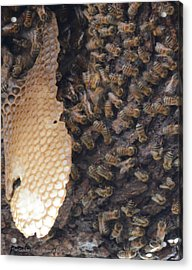 The Golden Hive  Acrylic Print by Shawn Marlow