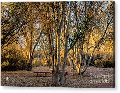 The Golden Hour Acrylic Print by Tammy Espino