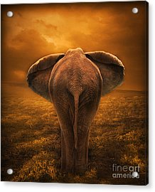 The Golden Savanna Acrylic Print by Lynn Jackson
