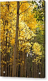 Acrylic Print featuring the photograph The Golden Tree by Eric Rundle