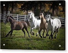 Acrylic Print featuring the photograph The Goldendale Four 7277 by Wes and Dotty Weber
