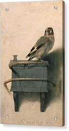 The Goldfinch Acrylic Print by Carel Fabritius