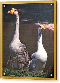 The Goose And The Gander Acrylic Print by Patricia Keller