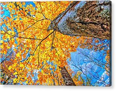 The Gorgeous Fall Acrylic Print by Kimberleigh Ladd