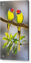 The Gorgeous Guys - Plum-headed Parakeets Acrylic Print by Frances McMahon