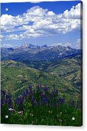 The Grand And Lupines Acrylic Print